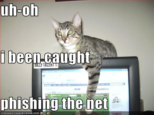 Cat caught phishing