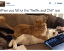 15 Examples of What it Means to 'Netflix and Chill'