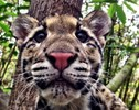Biologists Share All the Darling Animals Nature Has to Offer in a Bid to Win the Social Media Cute Off