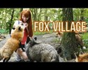 You Can Tour a Fox Village In Japan