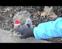 What Do You Do When a Squirrel Befriends You? Make Hats for Them of Course!