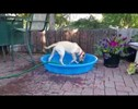 I Can Fill the Doggie Pool. You Don't Have to Lift a Finger, See?