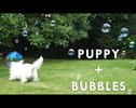 Having a Bad Day? Just Relax and Watch This Puppy Play With Bubbles