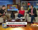 Watch These Morning News Anchors Get Sprayed by a Skunk!