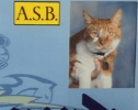 Bubba the Cat Has Become a California High School's Star Pupil