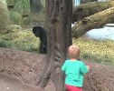 Just Two Toddlers Playing Peek-a-boo at the Zoo