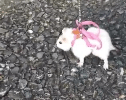 A Hamster Got Tiny a Leash So He Can Go on the Biggest Walk of His Life