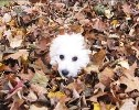 These Puppies Jumping in Leaves Will Show You What a Perfect Fall Day Looks Like