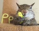 Rescue of the Day: Jill the Squirrel Escaped a Hurricane and Found a Happy Home
