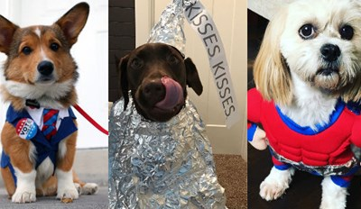 Forget Candy, Dogs in Costumes Are the Best Thing About Halloween