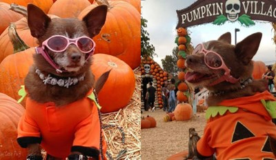 Miss Coco Puff Is Ready for Her Close up Now That Her Pumpkin Patch Photoshoot Has Gone Viral