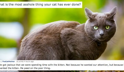 If You've Ever Had a Cat, You Should Be Able to Relate to These Horrible Stories of Pet Ownership