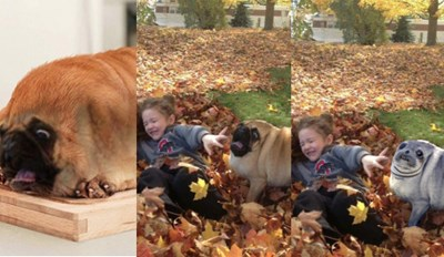 A Scared Pug and His Friend Got a Hilarious Photoshop Battle