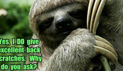 Celebrate International Sloth Day by Looking at These Memes Very, Very Slowly