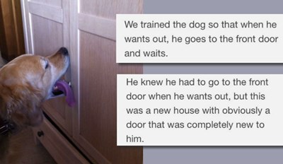 If You've Ever Had a Dog, This is Easily the Best Story You'll Read All Day