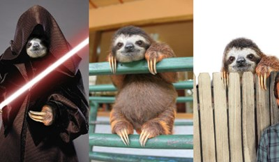 Adorable Picture of a Sloth Sitting on a Rail Finally Gets the Photoshop Battle Treatment