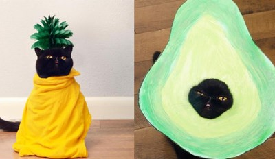 Willow the Squishy Cat Is Killing It at This Halloween Thing