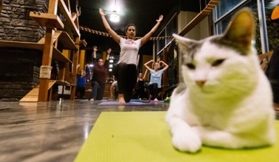 Start Working on Your Downward Dog Because Seattle's Only Cat Cafe Now Offers Cat Yoga