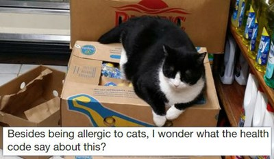 New Yorkers Do Not Take Kindly to People That Complain About Bodega Cats on Yelp