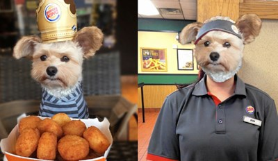 Dog Wearing a Burger King Crown Gets a Photoshop Battle That'll Make You Want to Have It Your Way