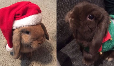 Everybunny Loves Christmas, Just Ask These Festive Rabbits