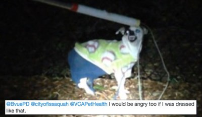 Twitter Can't Get Enough of This Angry Dog That Was Found Wearing Pants and a Sweater