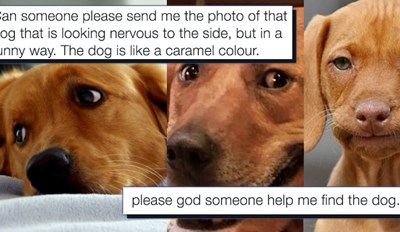 One Man's Search for a Dog Meme Really Brought the Internet Together