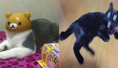 2016 Was a Weird Year for Cats in Japan and These Pictures Prove It