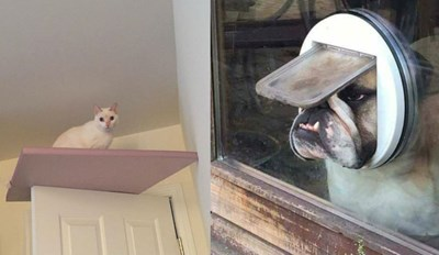 Here's Some of the Best Photos From the Animals in Predicaments Facebook Page