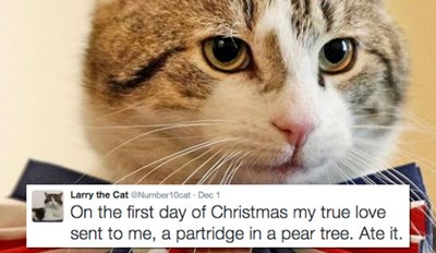 Larry the Cat Puts His Own Spin on the 12 Days of Christmas