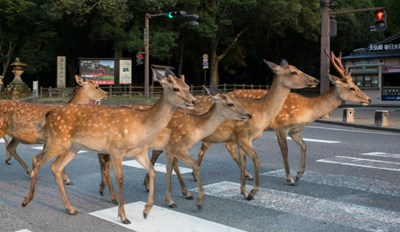 Take a Look Inside This City in Japan That's Run by Deer