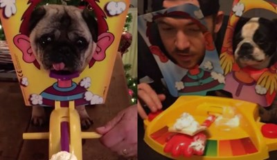 Everyone Is Playing the Game 'Pie Face' With Their Dogs and We Can't Get Enough