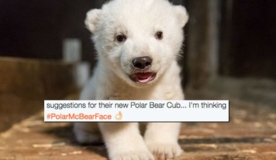 Zoo Berlin Wants the Public to Name Their New Polar Bear Cub and the Suggestions Are... Interesting