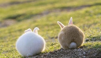 In Appreciation of Cute, Fluffy Bunny Tails