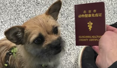 Gobi the Dog Met Her Best Friend During a Marathon in China and Now She's Finally Home