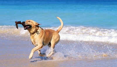 Cure Your Winter Blues by Looking at Dogs at the Beach