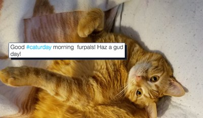 These Kitties Made the Most of Their Caturday