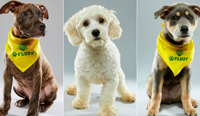 This Year's Puppy Bowl Contestants Are Extra Cute and Ready to Play Ball
