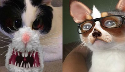 20 More Examples of People Using Snapchat Filters on Their Cats