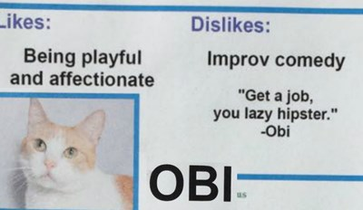 These Adoptable Cats Have Very Strong Opinions