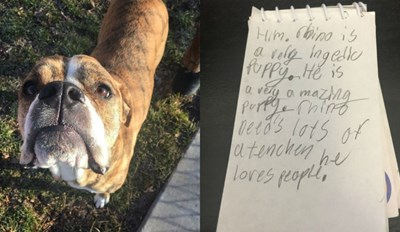 This Dog Was Surrendered to the Humane Society With a Note That Will Break Your Heart