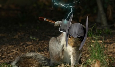 This Squirrel in a Superhero Pose Got a Marvelous Photoshop Battle