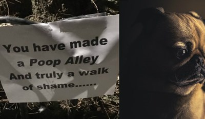 One Passive Aggressive Neighbor Is Fed up With People Leaving Their Dog Poop on the Sidewalk