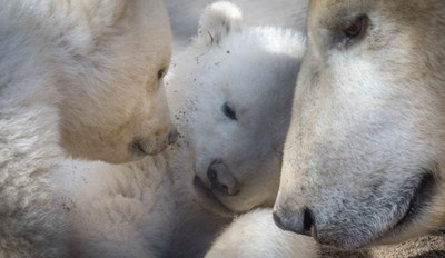 The Columbus Zoo Has Twin Polar Bear Cubs and They're So Precious