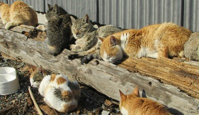 Just So You Know, Japan Has an Island With More Cats Than People
