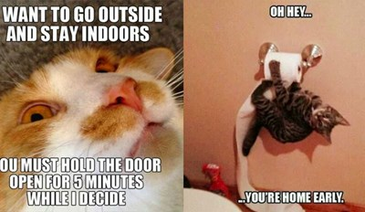 33 Funny Cat Memes That Never Fail to Make Us LOL