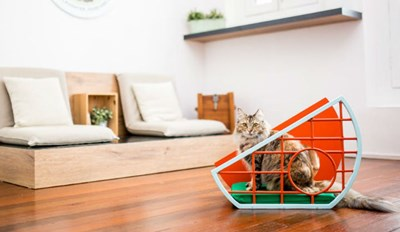 All of This Furniture Is Designed for Cats and the People That Live With Them
