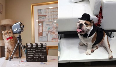 10 Pets That Dressed up and Tuned in for Hollywood's Biggest Night