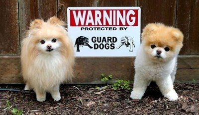 "38 Times ""Beware of Dog"" Signs Didn't Really Get Their Point Across"