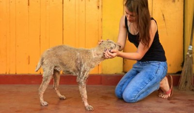 Woman Leaves Everything Behind to Help Dogs in Sri Lanka and Inspires Others to Do the Same
